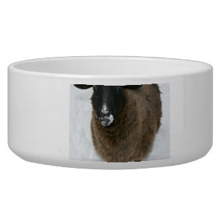 Sheep in snow bowl