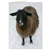 Sheep in snow card