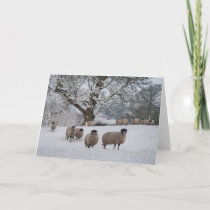 Sheep in Snow Holiday Card