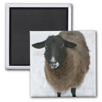 Sheep in snow magnet