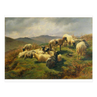Sheep in the Highlands by Rosa Bonheur Postcard