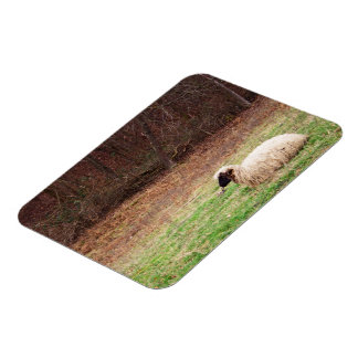 Sheep in the Meadow - Farm Nature Photography Magnet