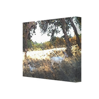 Sheep in the Shade of the Trees Canvas Print