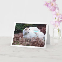 Sheep in Valley of Cwm Llan Card