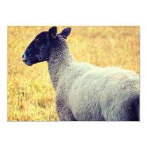 Sheep Invitation