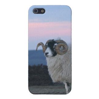 Sheep iPhone 4 Case