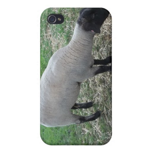 Sheep iPhone 4 Cover