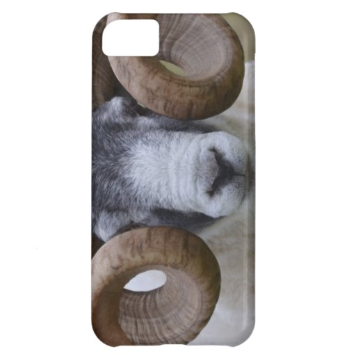 Sheep iPhone 5C Cover