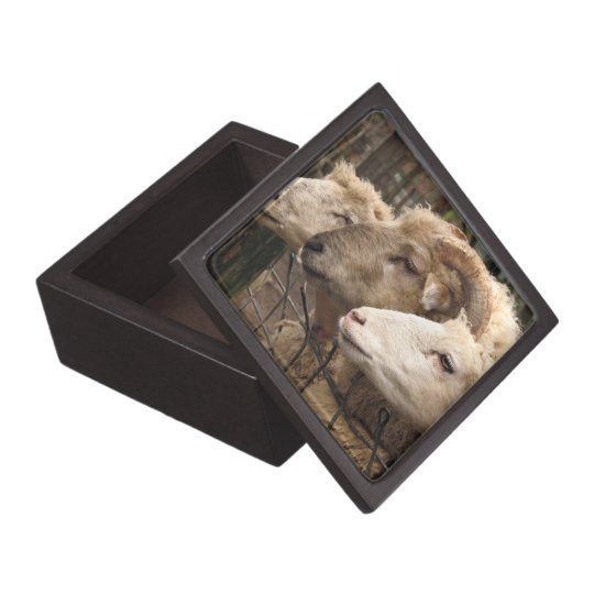 sheep jewelry box