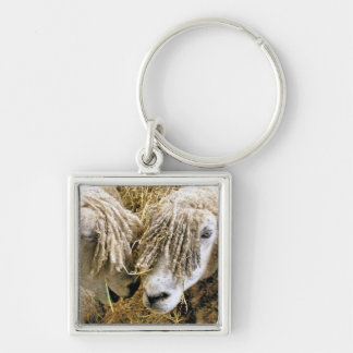 SHEEP Silver-Colored SQUARE KEYCHAIN