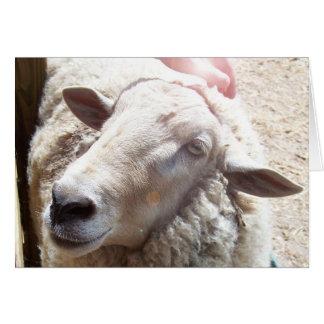 Sheep Lamb of God Christian greeting card