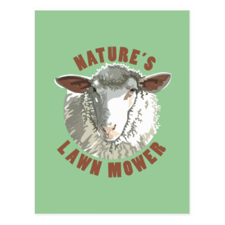 Sheep Lawn Mower Postcard