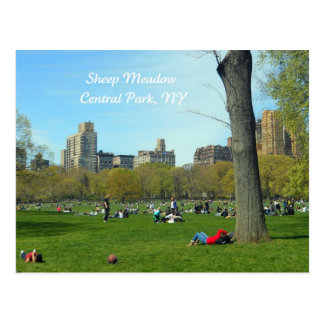 Sheep Meadow, Central Park, NYC Postcard