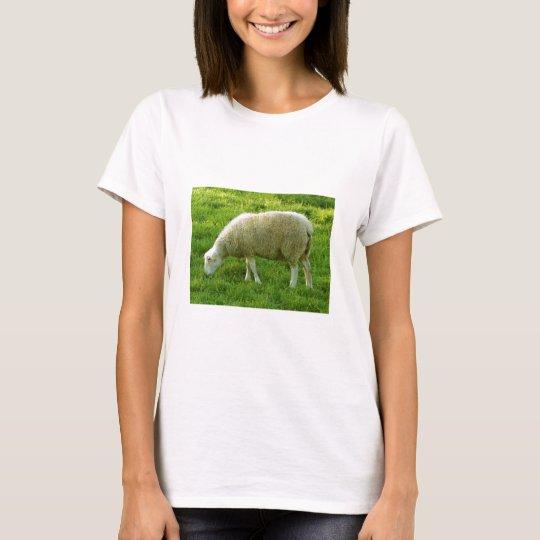 Sheep - Mouton T-Shirt