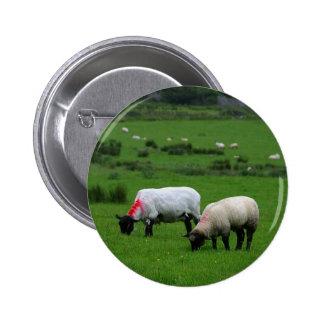 Sheep Near Deerpark Ireland Buttons