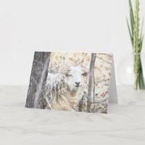 Sheep Note Card