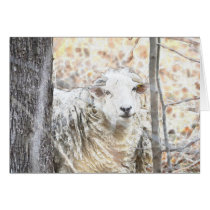 Sheep Note Card