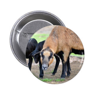 Sheep on Cameroun with lambs Pinback Button