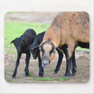 Sheep on Cameroun with lambs Mouse Pad