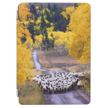 Sheep on Country Road iPad Air Cover