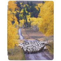 Sheep on Country Road iPad Smart Cover
