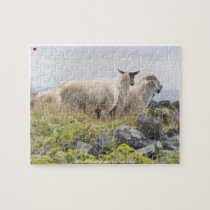 Sheep on the Aran Islands Galway Ireland Jigsaw Puzzle
