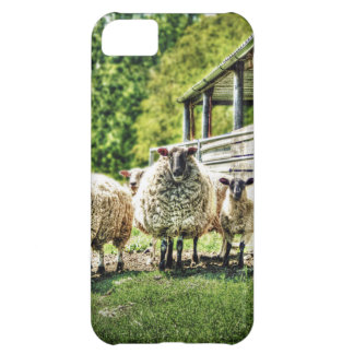 Sheep on the farm countryside iPhone 5C case