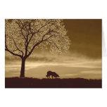 Sheep on the horizon~Border Collie Christmas Greeting Cards