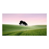 """Sheep on the horizon..""~Border Collie Photo Card"