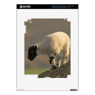 Sheep on the Moors iPad 3 Skin