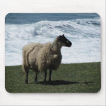 Sheep on wild south Devon coastline Mouse Pad