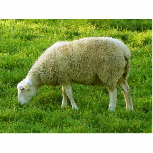 Sheep - Oveja Escultura Fotográfica