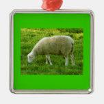 Sheep - Oveja Ornato