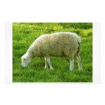 Sheep - Oveja Papeleria