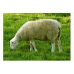 Sheep - Oveja Tarjetas Personales