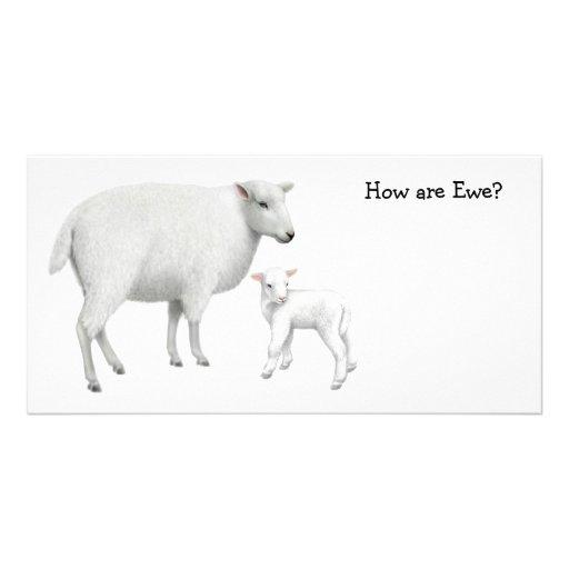 Sheep Photo Card