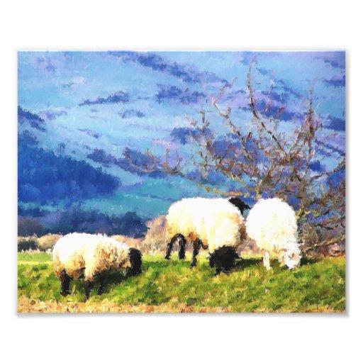 SHEEP PHOTO PRINT