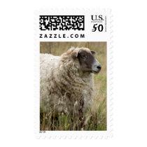 Sheep Portrait Postage