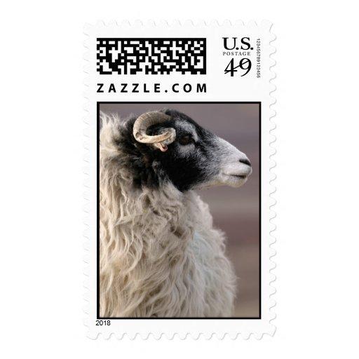 Sheep Postage Stamp Stamps
