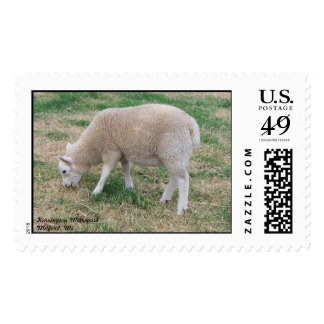 Sheep Postage Stamp (LARGE)