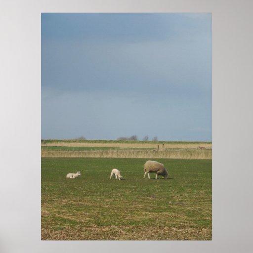 Sheep Poster Art Print