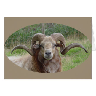 Sheep - Rams Head Card