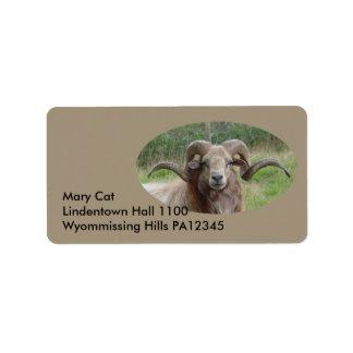 Sheep - Rams Head Label