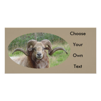 Sheep - Rams Head Personalized Photo Card