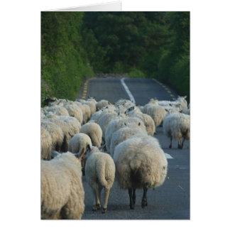 Sheep Roads Lambs Cards