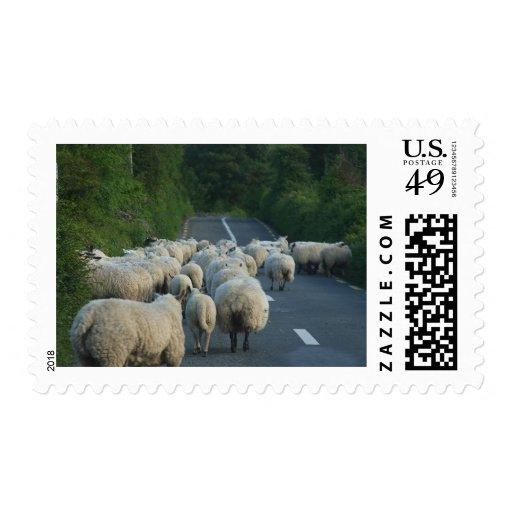 Sheep Roads Lambs Postage