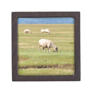 Sheep salt meadows jewelry box