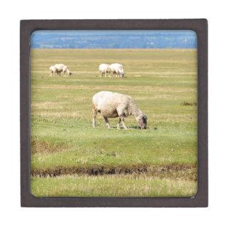 Sheep salt meadows keepsake box