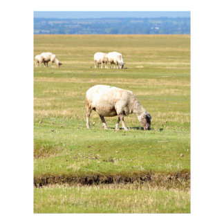 Sheep salt meadows letterhead