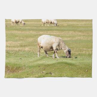 Sheep salt meadows towel